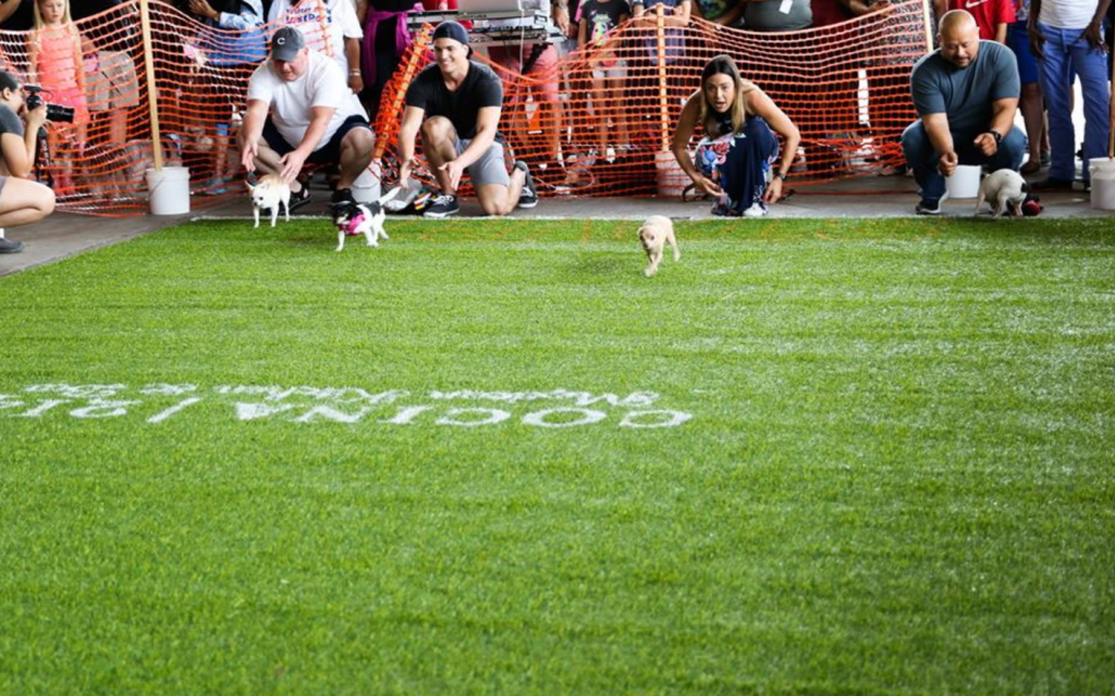 Cocina 214 Hosts 7th Annual Running of the Chihuahuas