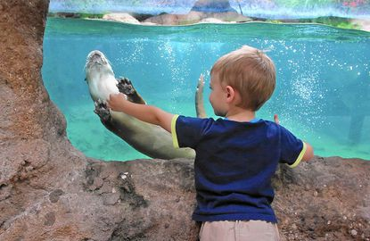 Central Florida Zoo & Botanical Gardens - There Is No Zoo Without You