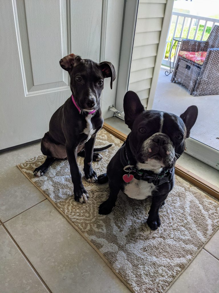 I'm Officially a Foster Failure - The Story of Thea