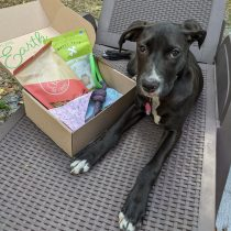 Furrball Friday: Pure Earth Pets Eco-Friendly Dog Box Review